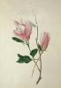 bloemen_28