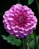 bloemen_292