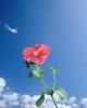 bloemen_294