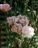 bloemen_296