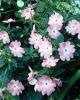 bloemen_297
