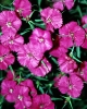 bloemen_299
