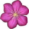 bloemen_2