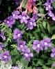 bloemen_300