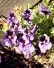 bloemen_301