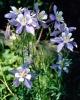bloemen_302