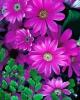 bloemen_304