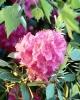 bloemen_306