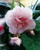 bloemen_307