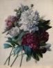 bloemen_30