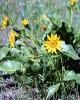 bloemen_310