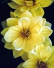 bloemen_311