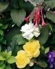 bloemen_314