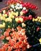bloemen_316
