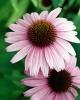 bloemen_319