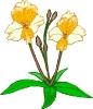 bloemen_320