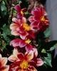 bloemen_321