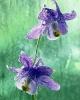 bloemen_325