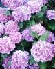 bloemen_326