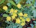 bloemen_327
