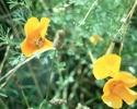 bloemen_328