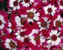 bloemen_329