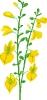 bloemen_330