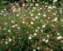 bloemen_334