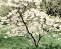 bloemen_335