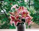 bloemen_338