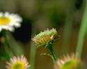 bloemen_339