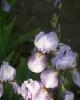 bloemen_340
