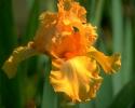 bloemen_341