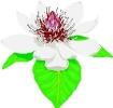 bloemen_342