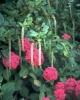 bloemen_343