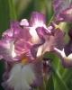 bloemen_344