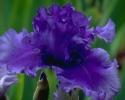 bloemen_345