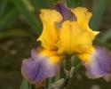 bloemen_347