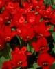 bloemen_351