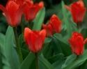 bloemen_352