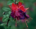 bloemen_355