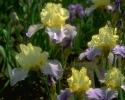 bloemen_356