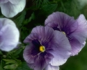 bloemen_358