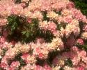 bloemen_362