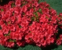 bloemen_363