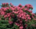 bloemen_365