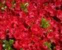 bloemen_368