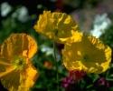 bloemen_371