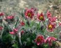 bloemen_372