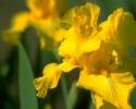 bloemen_376